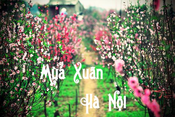 Giá vé máy bay từ thành phố Hồ Chí Minh đi Hà Nội