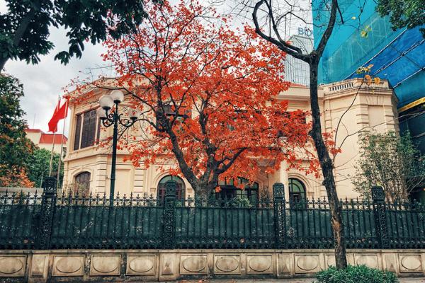 Hà Nội đẹp ngỡ ngàng mùa thay lá