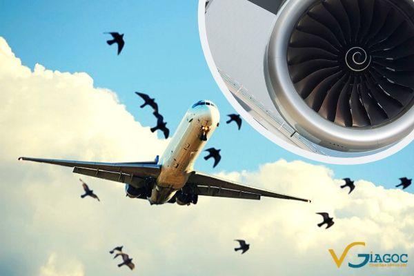 Tại sao máy bay thường sợ những chú chim va vào